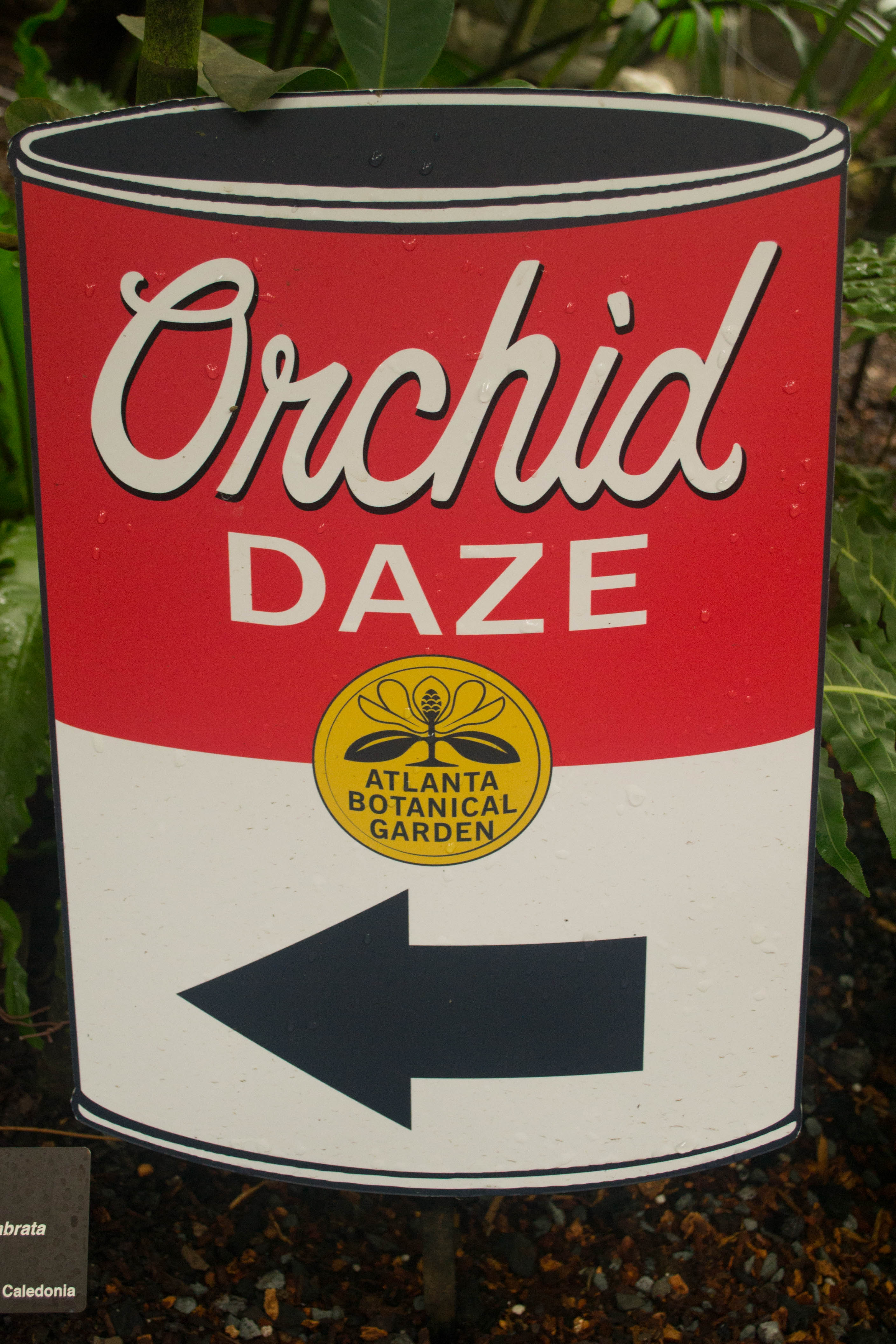 orchid daze can