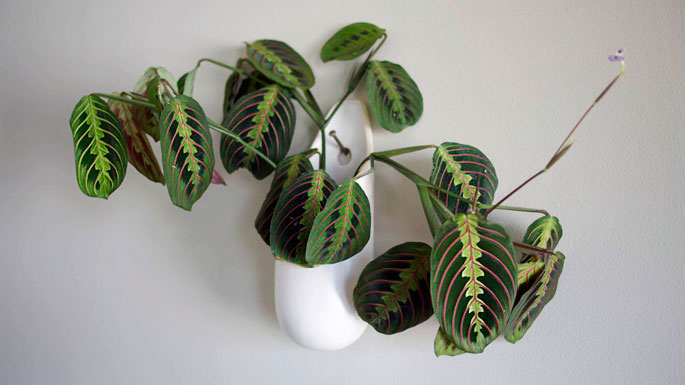 Indoor Houseplants you can't kill