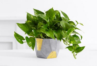 Five Indoor Plants you Can't Kill